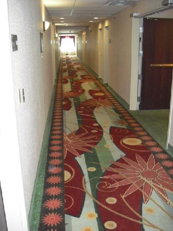 Hampton Inn & Suites Cleveland-Mentor: 3rd floor hallway