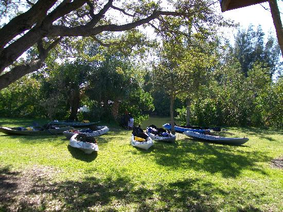 Fin Expeditions: Getting ready to kayak