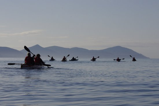 Kingfisher Wilderness Adventures - Orca Waters Kayak Day Trips