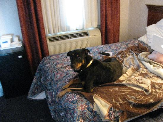 Inn at Cemetery Hill: dog in room