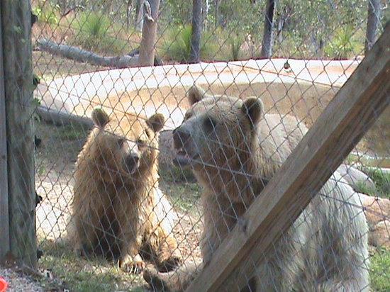 Cairns Wildlife Safari Reserve: Brown Bears