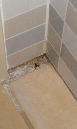 Ivy Hotel Napa: Pet spider behind bathroom door