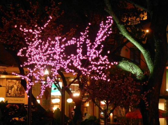 Greenbelt Park: Night Life Light