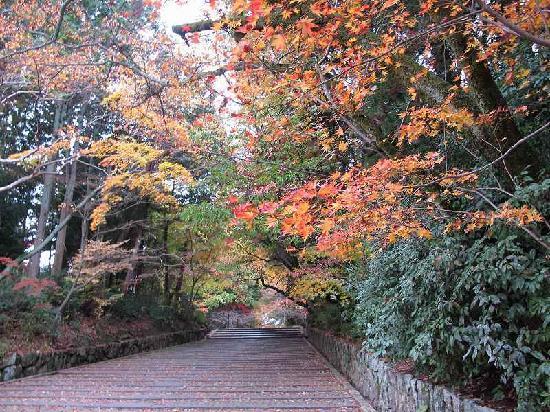 Komyoji Temple: 光明寺の紅葉