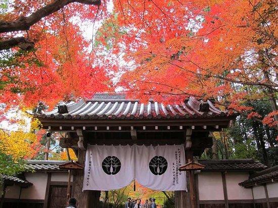 Nagaokakyo, اليابان: 光明寺の紅葉
