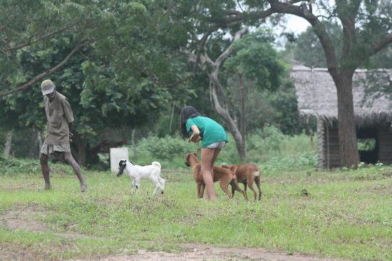 Wilpattu National Park : Baby goats too !!