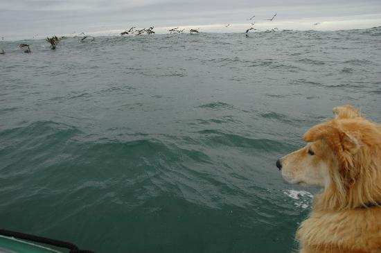 Whale Research EcoExcursions: Her dog, Kida.  He goes on every trip!
