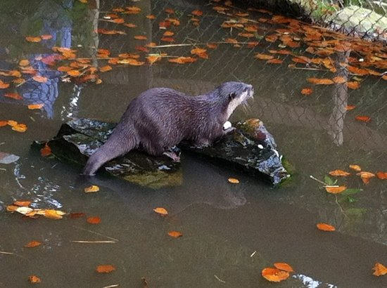 Tamar Otter and Wildlife Centre: feeding time fun!