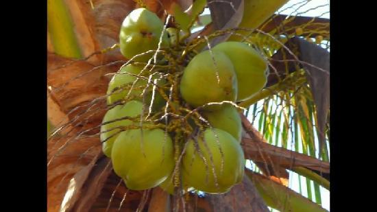 Moya, Komory: noix de coco