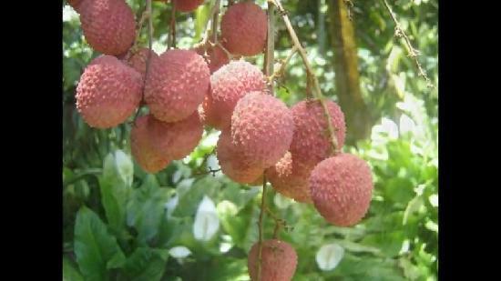 fruit sucre pour les restau moya