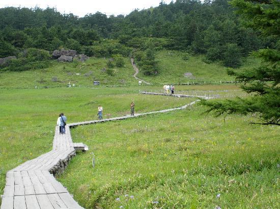 池の平湿原2 - 長野県、東御市の写真 - トリップアドバイザー