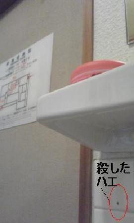 Ryokan Tanada : 洗面所のショウジョウバエ