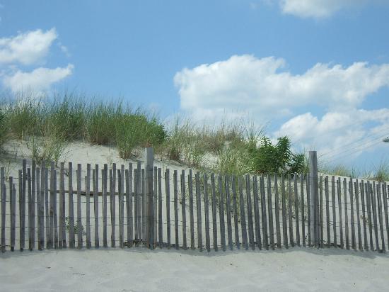 Ship Bottom Beach: Ship Bottom dunes