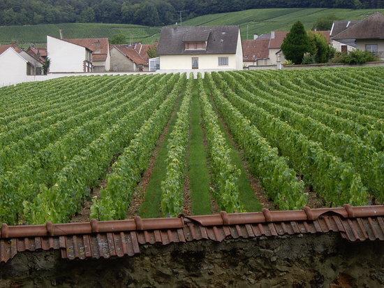 """Marne, France: """"le clos du mesnil """" la più piccola vigna che da il miglior  champagne a Le Mesnil sur-Oger"""