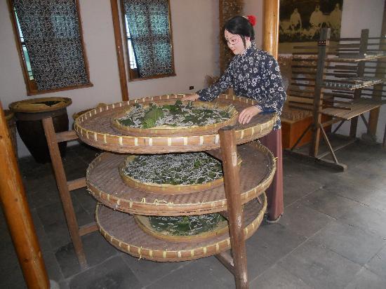 Suzhou Silk Museum: Silk museum: live silk worms