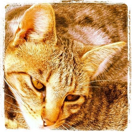 Exus Natur: la gata Maya
