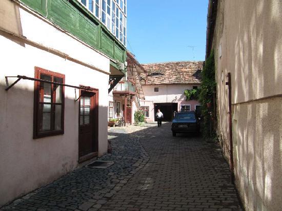 Casa Baciu yard