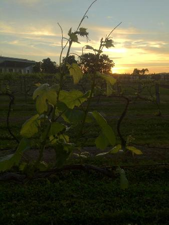 Azjure Studio Retreat: Sun setting over the vineyard