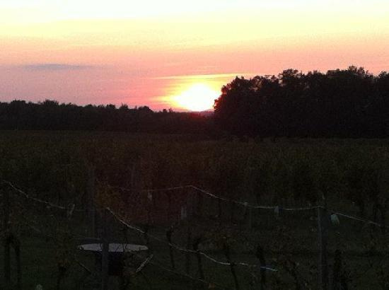Le Cros B&B: Sunset over the vines