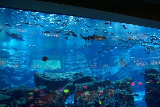 View of main tank from mall   Picture of Dubai Aquarium  u0026 Underwater Zoo, Dubai   TripAdvisor