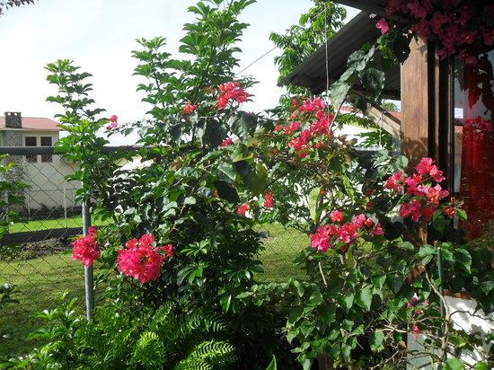 B&B Hotel La Casa Romantico: Blütenpracht auf der Terrasse