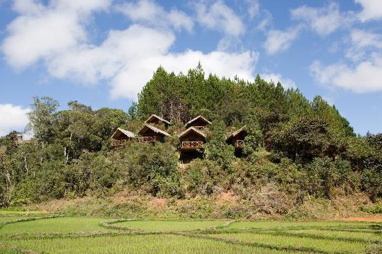 Saha Forest Camp: Saha Forest View of the lodges