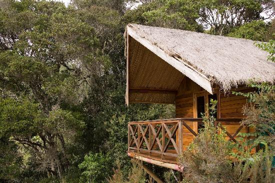Saha Forest Camp: Cabin looking at Forest