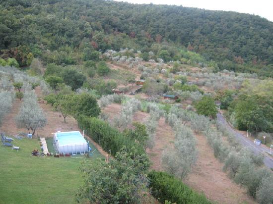 Il Torrino di Sotto B&B: Olive trees