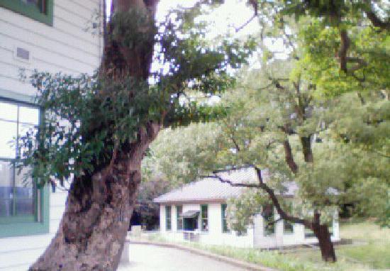 長浜ホール, 旧事務棟(写真左)より旧細菌検査室を望む