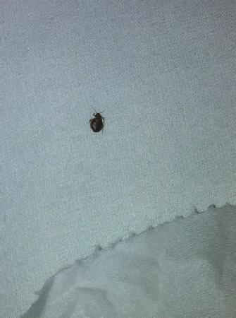 The Inveraray Inn: Bed bug. An unexpected amenity in room 115.