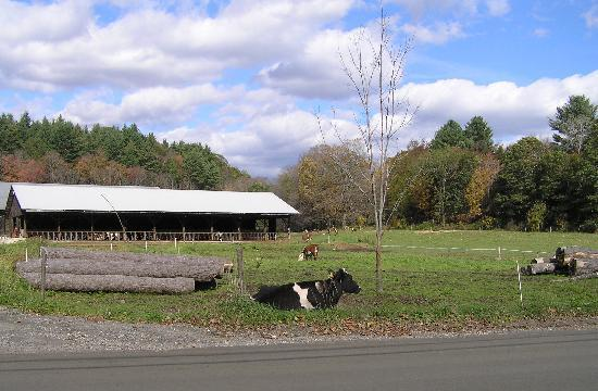 Robb Family Farm : Pasture