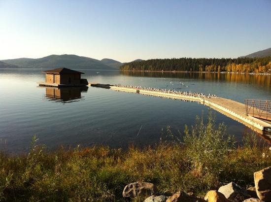Lodge at Whitefish Lake: sea gulls on the pier