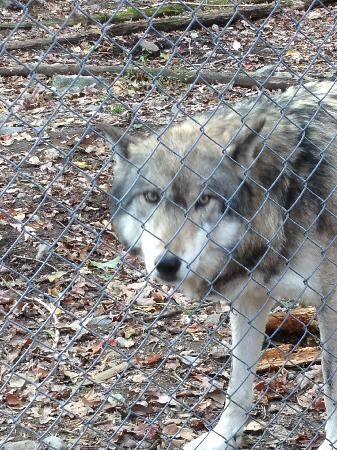 Lakota Wolf Preserve: Just one of the many beauties to see!