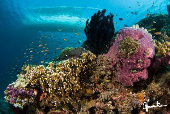 Gangga Divers at Villa Almarik: Underwater View of the Boat