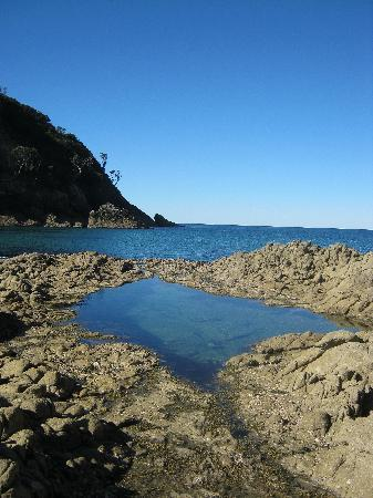 Shoal Bay Estate, Great Barrier Island: mermaid pool