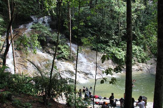 Kanching Rainforest