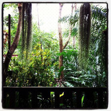 Khao Sok Las Orquideas Resort: Blick von unserer Veranda