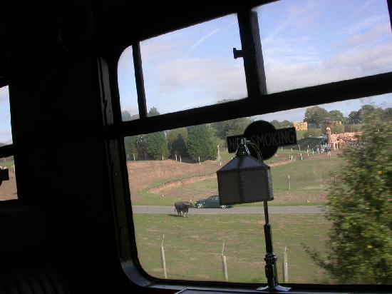 Severn Valley Railway: view of safaripark