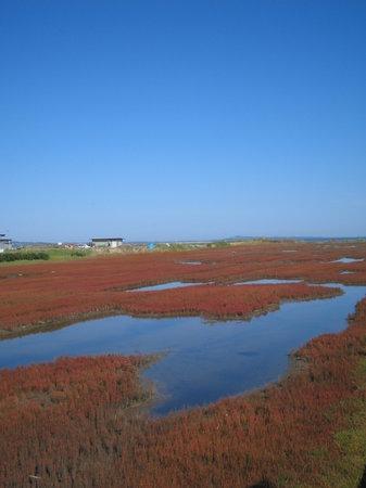 Abashiri, Japan: サンゴ草