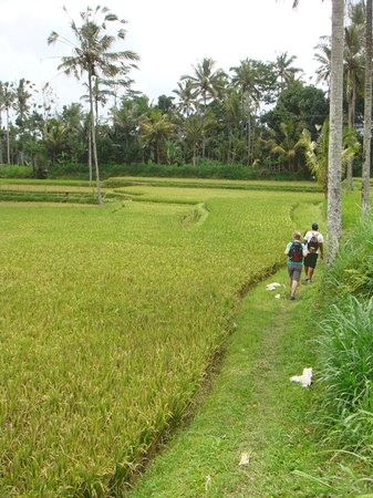 Pejeng, Indonesien: a walk through the rice fields
