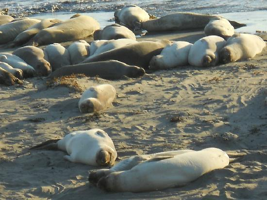 Piedras Blancas: Laid out on the beach