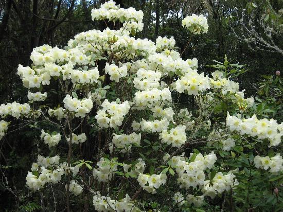 Waipahihi Botanical Gardens: flowers