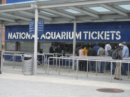 Dolphin Show Must Have Ticket To Attend Foto Di