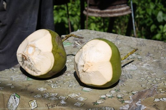 Real Tours Jamaica - Day Tours: Jelly coconut