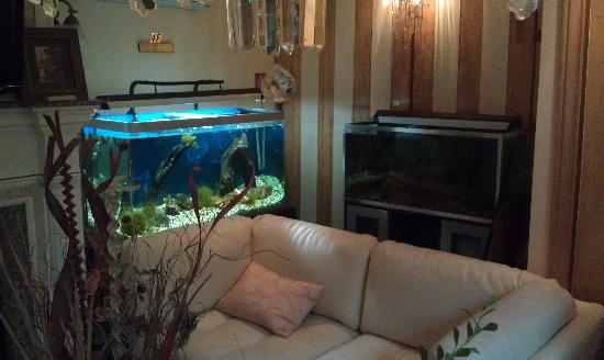 Chateau St-Marc : Fish Tanks!