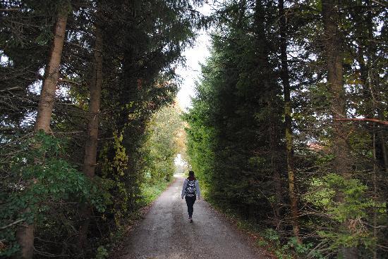 Steinerhof: gravel lane to the house