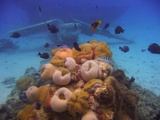 TOPDIVE Tahiti : l'aquarium
