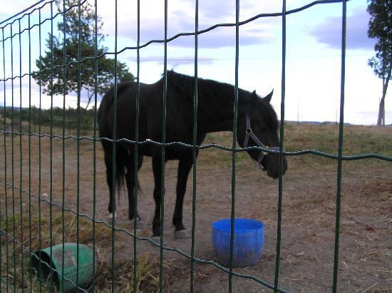 Agriturismo I Gretacci: Cavallo dell'agriturismo