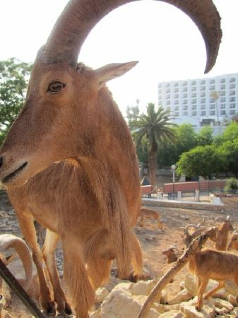 Surf Town Morocco : зоопарк в Агадире