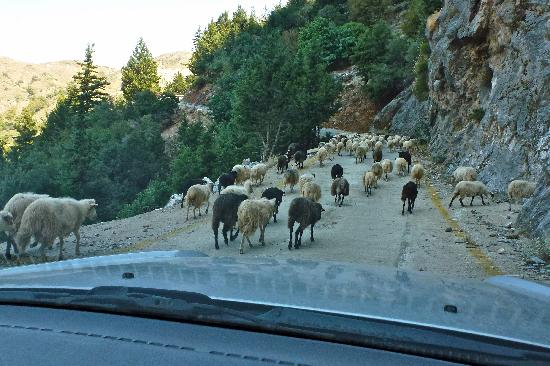 Lofos Village: Traffic jam in the mountains